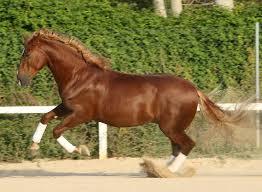 20170116005934-foto-caballo.jpg